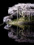 nakajima-615tw.jpg
