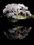nakajima-620tw.jpg