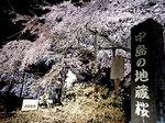 nakajima-625.jpg