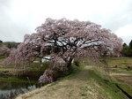 yosimizu569.jpg